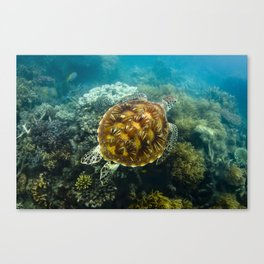 Turtle swimming over reef Canvas Print