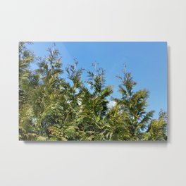 Lined up Thuja trees  Metal Print