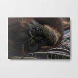 Orangutan at the Toronto Zoo Metal Print