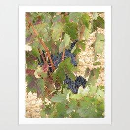 Rioja Grapes 2 Art Print