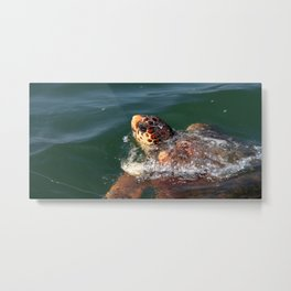 Loggerhead Turtle (Caretta Caretta) Breaking The Sea Surface Metal Print