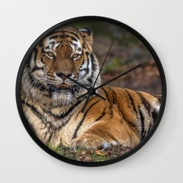 Marvelous Magnificent Grown Tiger Resting In Greenery UHD Wall Clock