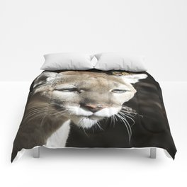 Fall Cougar Comforters