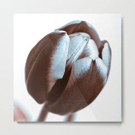 BROWN TULIP Metal Print