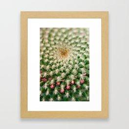 Cactus close-up shot, natural abstract background Framed Art Print