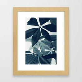 Pachira Aquatica #4 #foliage #decor #art #society6 Framed Art Print