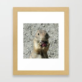 Prairiedog_20171201_by_JAMFoto Framed Art Print