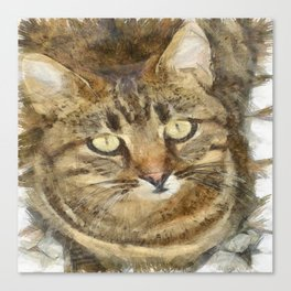 Cute Tabby Looking Up Canvas Print