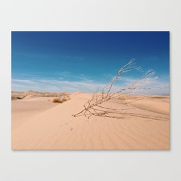 tumbling on dunes Canvas Print