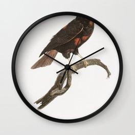Little Lilac-breasted roller from Histoire Naturelle des Oiseaux de Paradis et Des Rolliers (1806) b Wall Clock