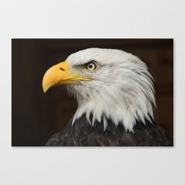 Eagle Photography | Nature | Wildlife Art | American | Rustic Wall Art | Animal Photography Canvas Print