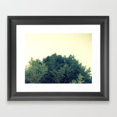 Under The Fir Tree Framed Art Print