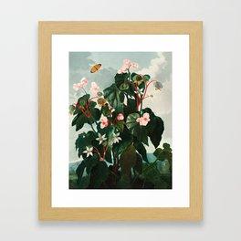 Robert John Thornton - The Oblique–Leaved Begonia Framed Art Print