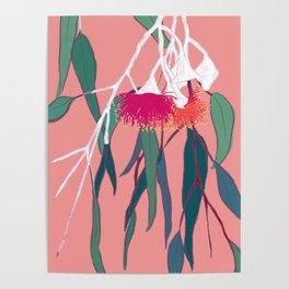 Gumnut Flower Poster Poster
