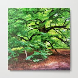 Century Oak Tree Metal Print