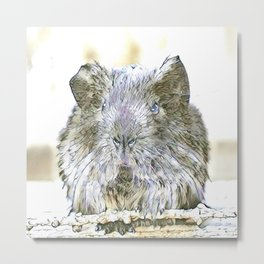 fascinating altered animals - guina pig Metal Print