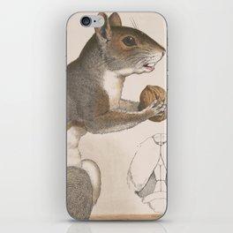 Vintage Illustration of a Grey Squirrel iPhone Skin
