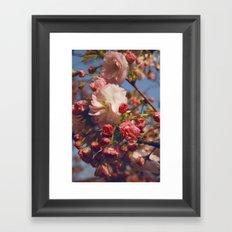 Blossoms in Beijing Framed Art Print