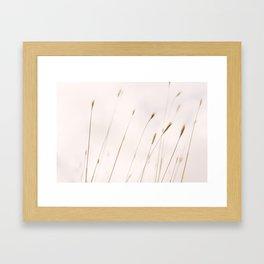 Tall grass against cloudy sky Framed Art Print