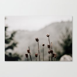 Wild Winter Teasels Canvas Print