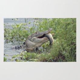Alligator eating a large fish in Florida lake Rug
