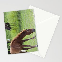 Wild Spanish mustang colt Stationery Cards