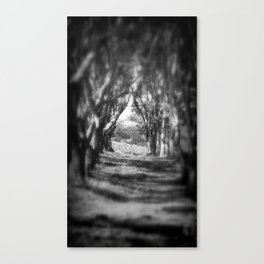dreaming of trees Canvas Print