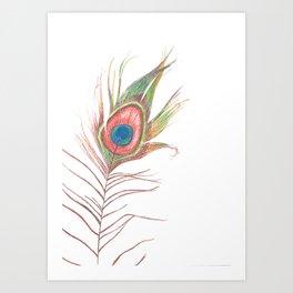 Peacock Bird Feather Art Art Print