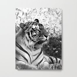Bengal Tiger in Repose Metal Print