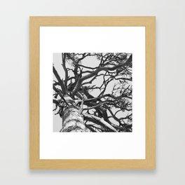 Pinewood Framed Art Print