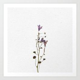 Forever Flower Art Print