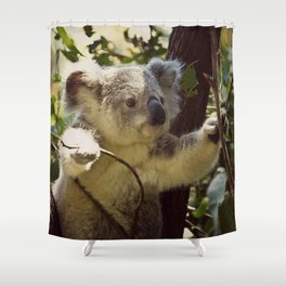 Sweet Koala Baby Shower Curtain