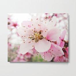 Pink Plum Blossoms Metal Print