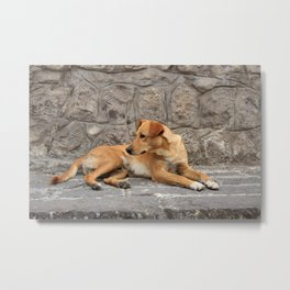 Brown Dog on a Stone Step Metal Print