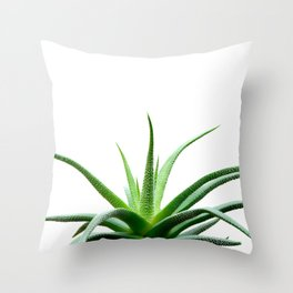 Succulents - Haworthia attenuata - Plant Lover - Botanic Specimens delivering a fresh perspective Throw Pillow