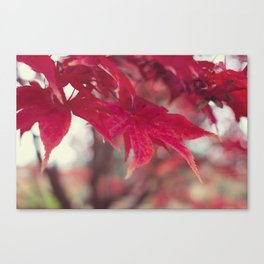 Fire Red Canvas Print