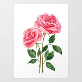 two pink roses watercolor Art Print