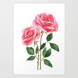 two pink roses watercolor Art Print