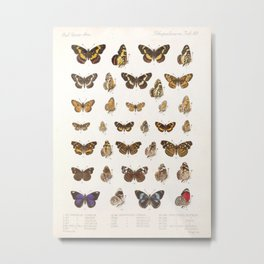 Vintage Scientific Insect Butterfly Moth Biological Hand Drawn Species Art Illustration Metal Print