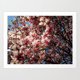 Partially Pink Art Print