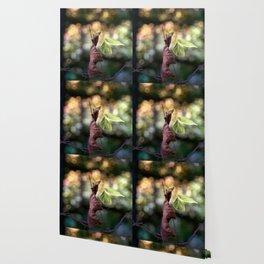 Nature fazination Wallpaper