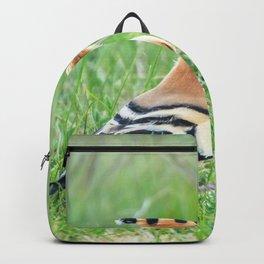 Hoopoe, Common Hoopoe (Upupa epops) Eurasian Hoopoe Backpack