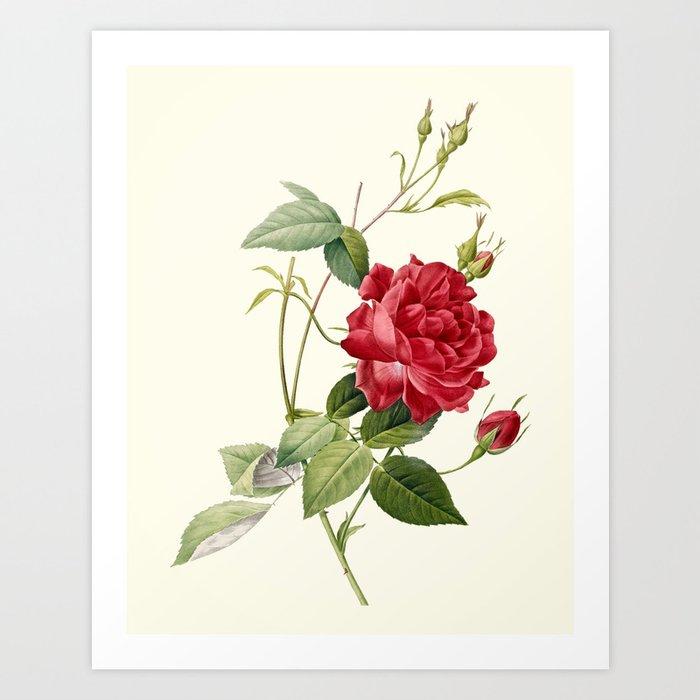 Dark Red Roses Flowers Watercolor Botanical Art Boho: Botanical Print, Red Roses Art Print By Pixdezines