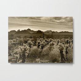 Teddy Bear Cactus Metal Print