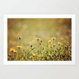 Yellow Wildflowers in the Sun Art Print