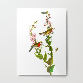 Chestnut Sided Warbler Bird Metal Print