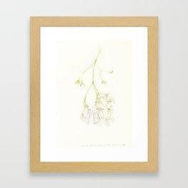 Catalpa Blossom 1 Framed Art Print