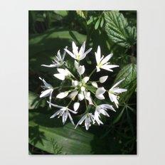 Wild alium Canvas Print