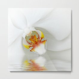 Orchid 131 Metal Print