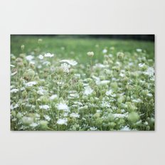 Field of Lace - Queen Ann's Lace  Canvas Print